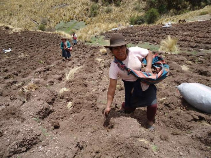 Agricultoras en la región de Cusco